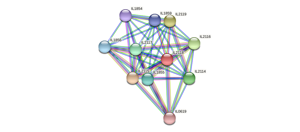 IL2118 protein (Idiomarina loihiensis) - STRING interaction network