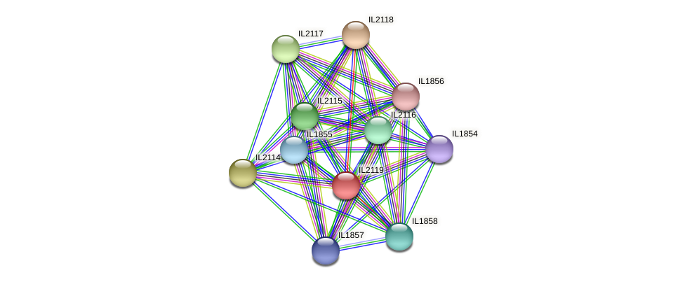 IL2119 protein (Idiomarina loihiensis) - STRING interaction network