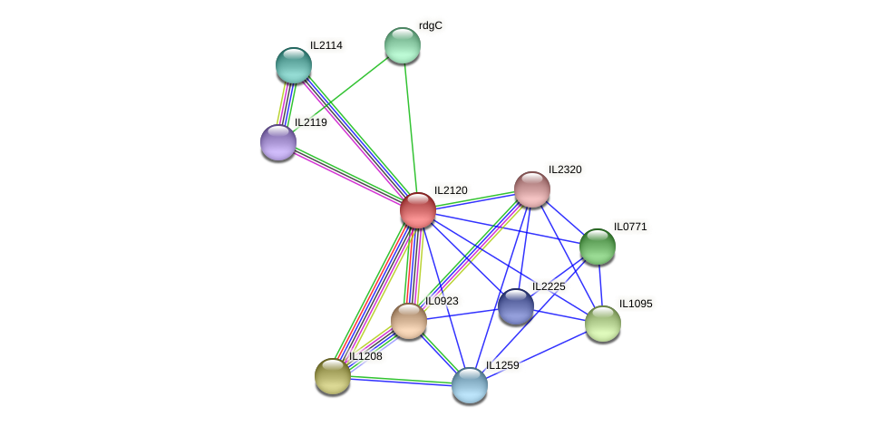IL2120 protein (Idiomarina loihiensis) - STRING interaction network