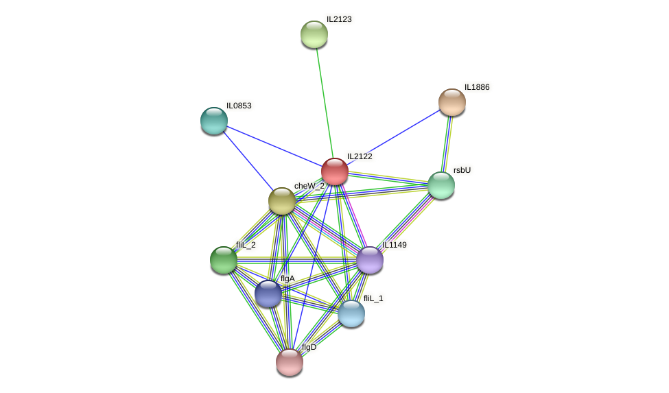 IL2122 protein (Idiomarina loihiensis) - STRING interaction network