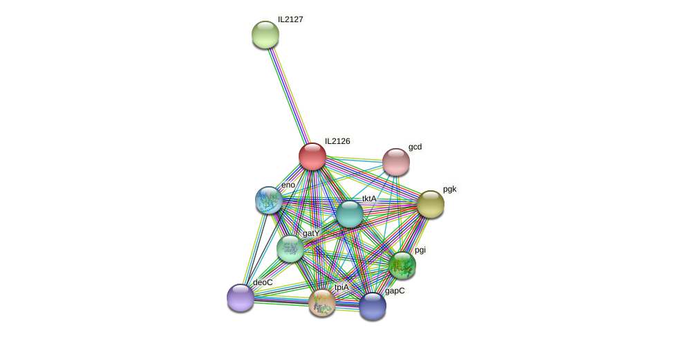 IL2126 protein (Idiomarina loihiensis) - STRING interaction network