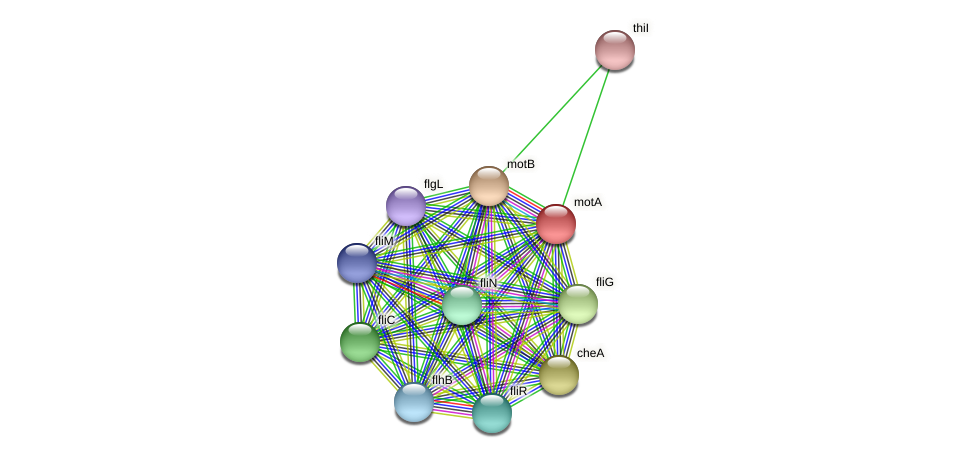 motA protein (Idiomarina loihiensis) - STRING interaction network