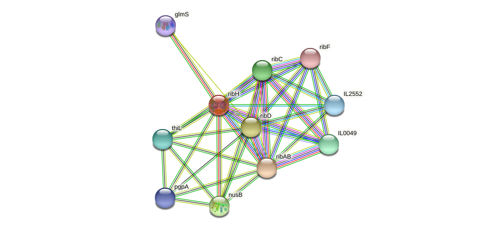 ribH protein (Idiomarina loihiensis) - STRING interaction network