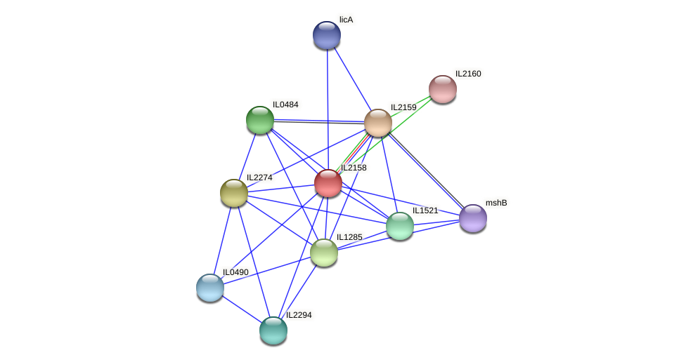 IL2158 protein (Idiomarina loihiensis) - STRING interaction network