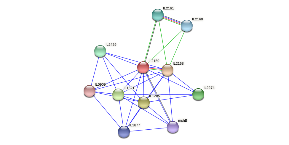 IL2159 protein (Idiomarina loihiensis) - STRING interaction network