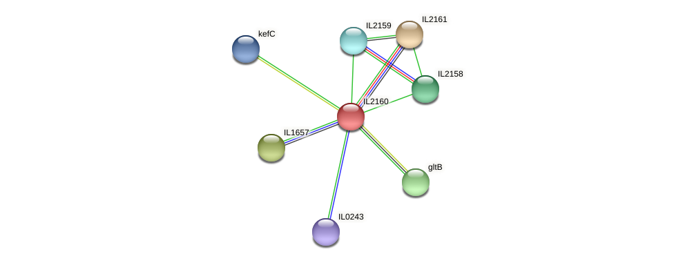IL2160 protein (Idiomarina loihiensis) - STRING interaction network