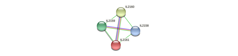 IL2161 protein (Idiomarina loihiensis) - STRING interaction network