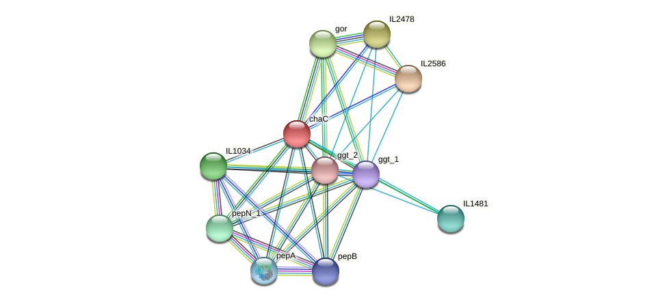 chaC protein (Idiomarina loihiensis) - STRING interaction network
