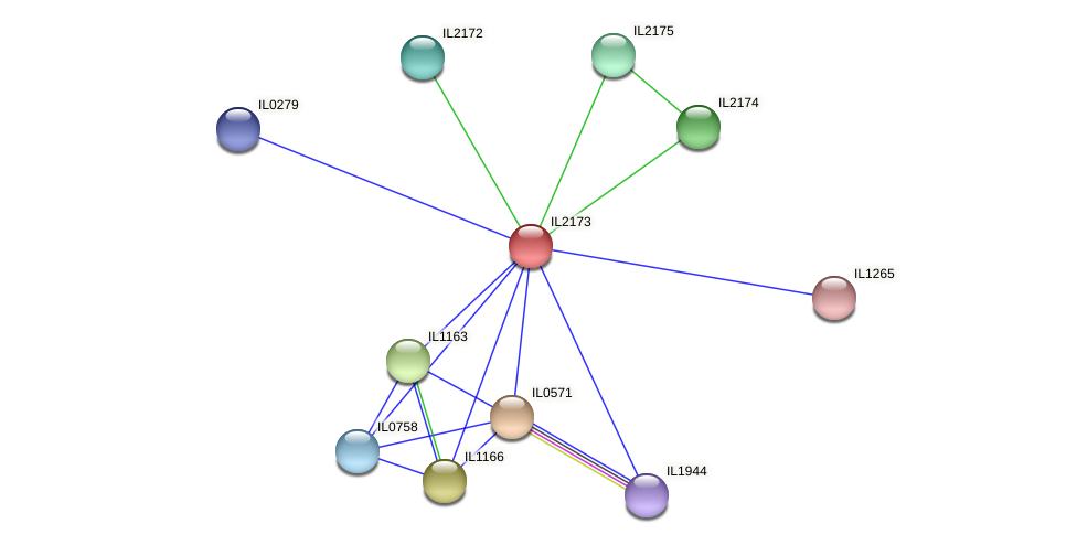IL2173 protein (Idiomarina loihiensis) - STRING interaction network
