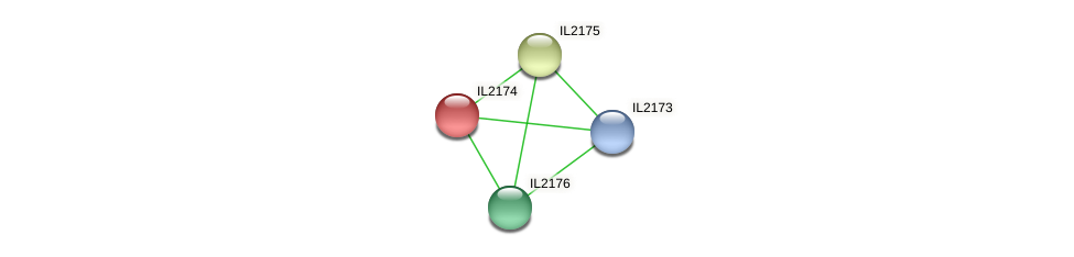 IL2174 protein (Idiomarina loihiensis) - STRING interaction network