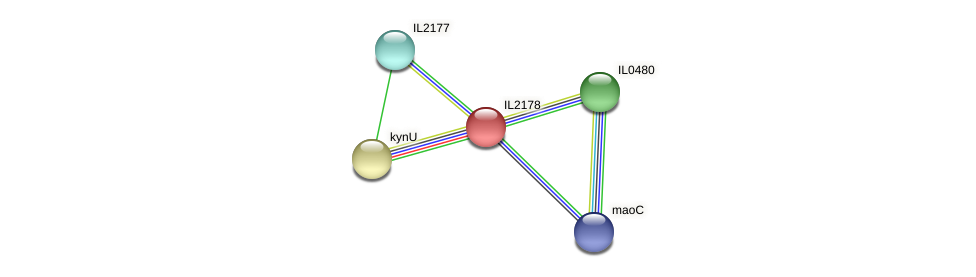IL2178 protein (Idiomarina loihiensis) - STRING interaction network