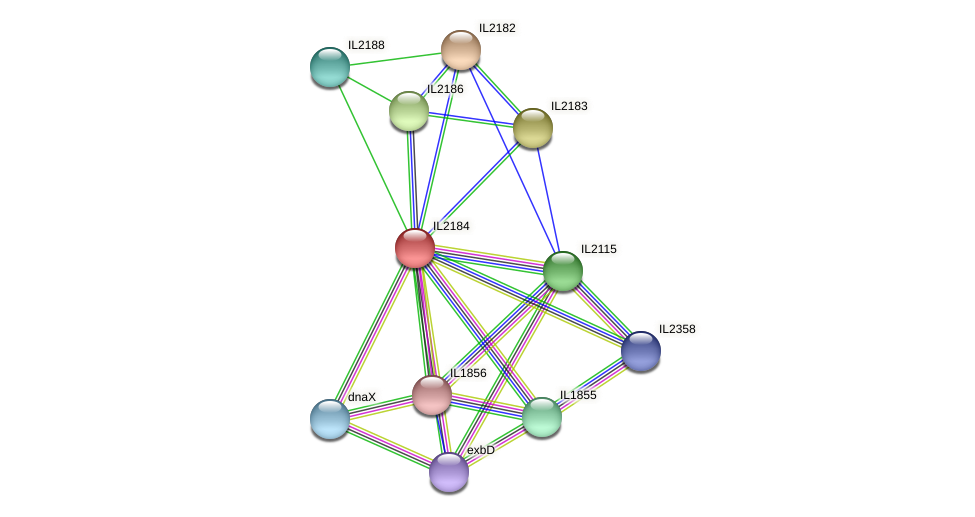 IL2184 protein (Idiomarina loihiensis) - STRING interaction network