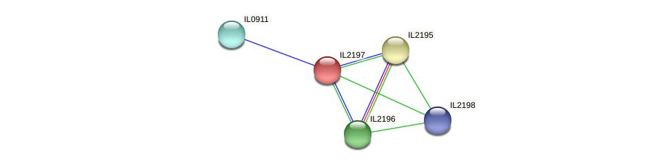 IL2197 protein (Idiomarina loihiensis) - STRING interaction network