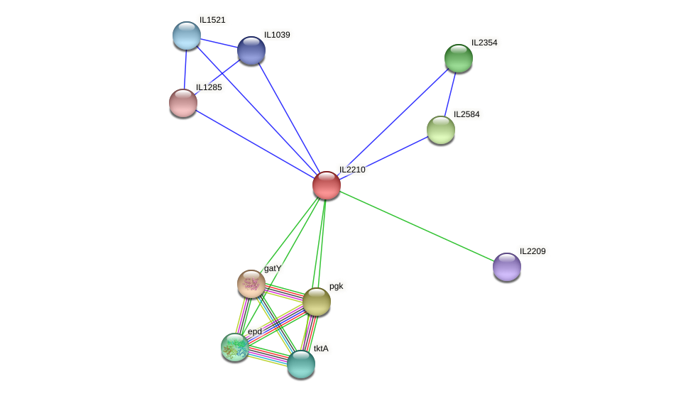 IL2210 protein (Idiomarina loihiensis) - STRING interaction network