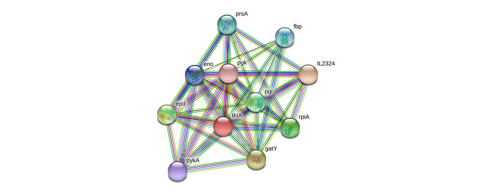 tktA protein (Idiomarina loihiensis) - STRING interaction network