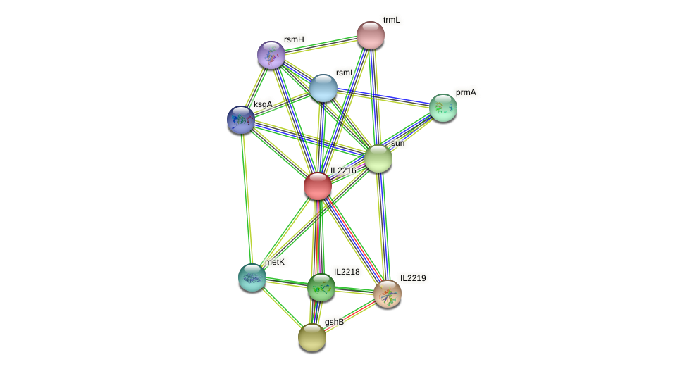 IL2216 protein (Idiomarina loihiensis) - STRING interaction network