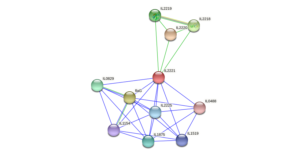 IL2221 protein (Idiomarina loihiensis) - STRING interaction network