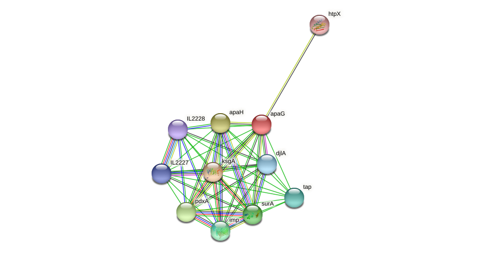 apaG protein (Idiomarina loihiensis) - STRING interaction network