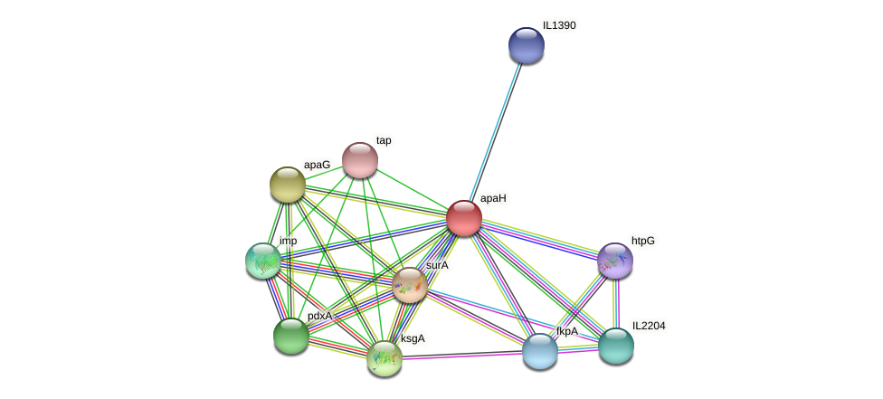 apaH protein (Idiomarina loihiensis) - STRING interaction network