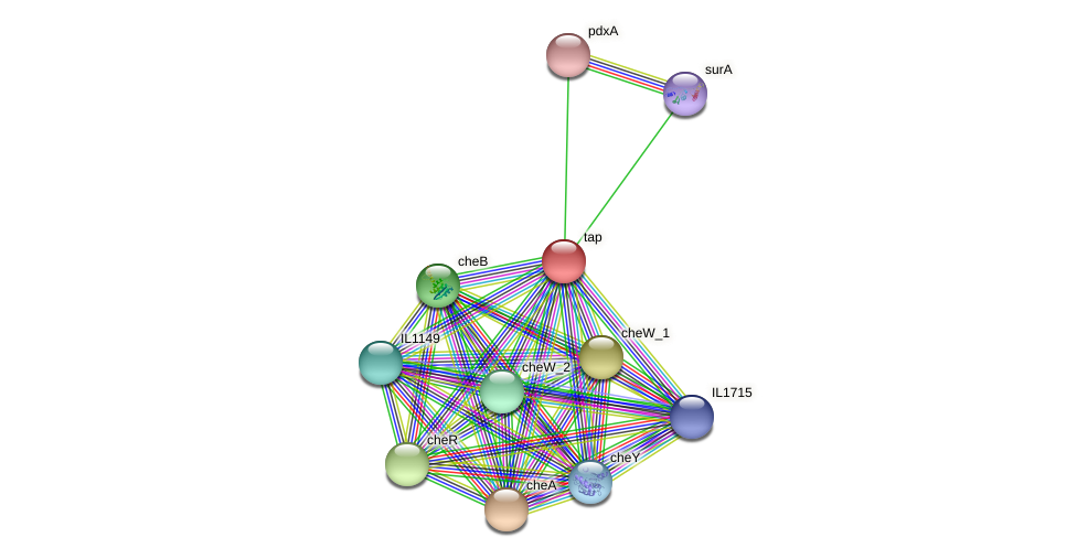 tap protein (Idiomarina loihiensis) - STRING interaction network