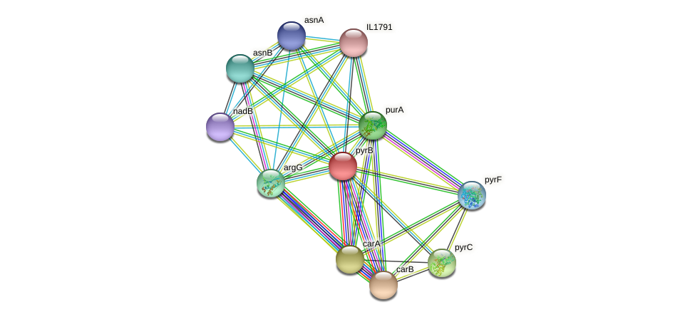 pyrB protein (Idiomarina loihiensis) - STRING interaction network