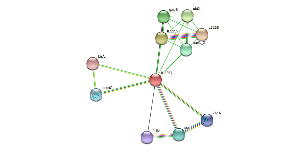 IL2257 protein (Idiomarina loihiensis) - STRING interaction network