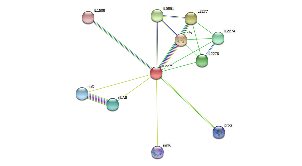 IL2275 protein (Idiomarina loihiensis) - STRING interaction network