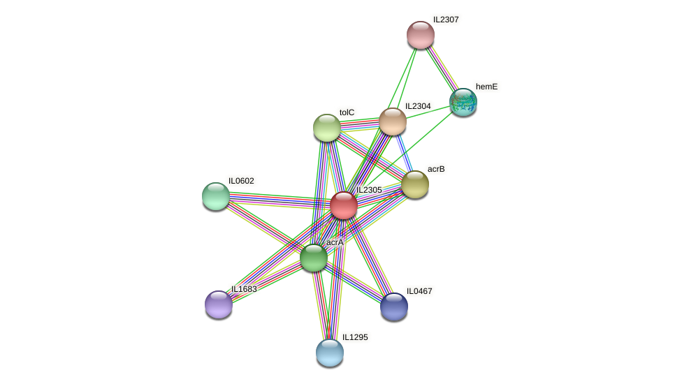 IL2305 protein (Idiomarina loihiensis) - STRING interaction network