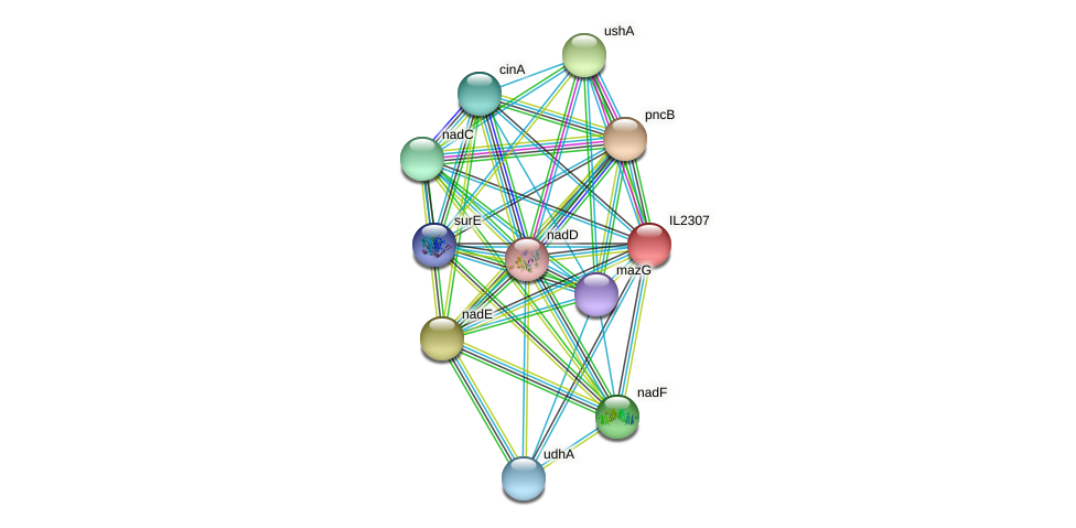 IL2307 protein (Idiomarina loihiensis) - STRING interaction network