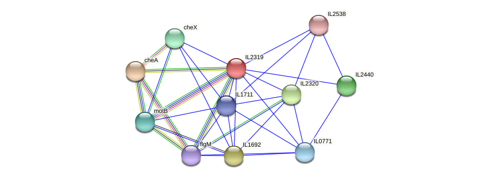 IL2319 protein (Idiomarina loihiensis) - STRING interaction network