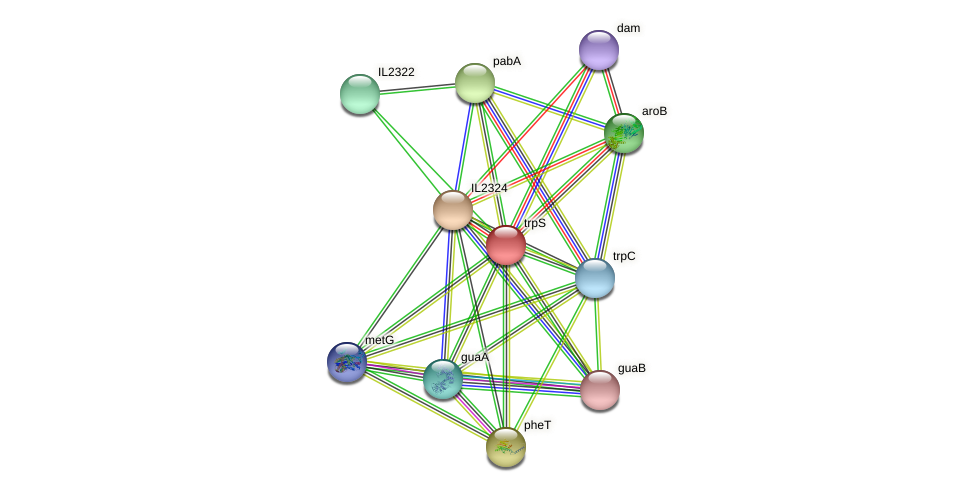 trpS protein (Idiomarina loihiensis) - STRING interaction network