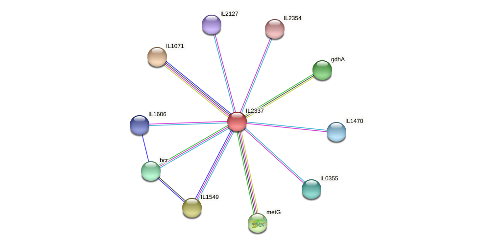 IL2337 protein (Idiomarina loihiensis) - STRING interaction network