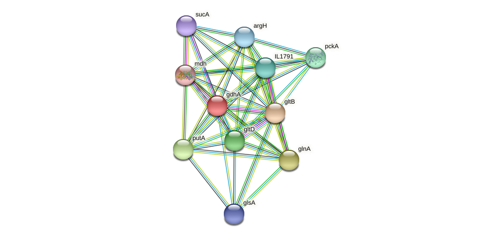 gdhA protein (Idiomarina loihiensis) - STRING interaction network