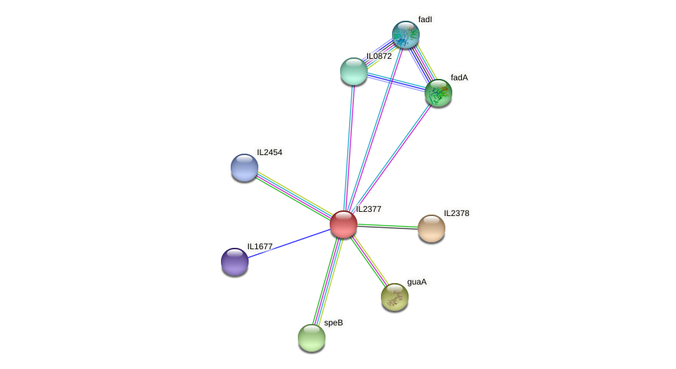 IL2377 protein (Idiomarina loihiensis) - STRING interaction network
