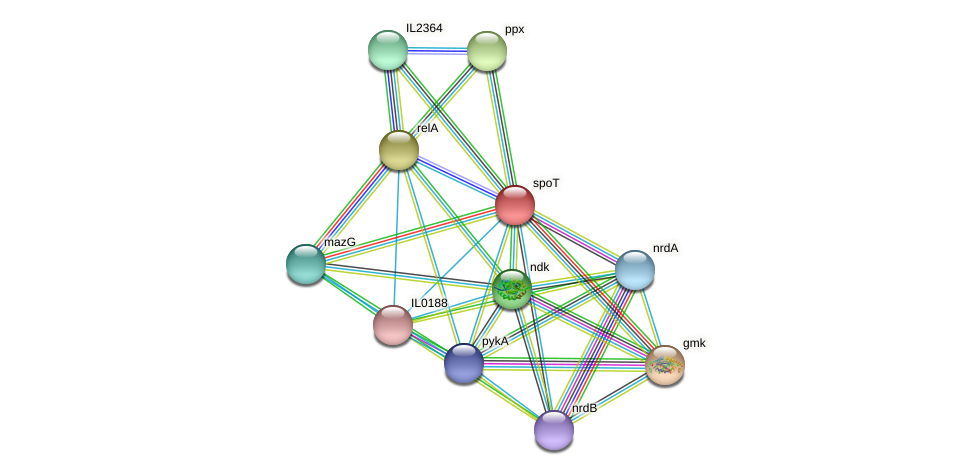 spoT protein (Idiomarina loihiensis) - STRING interaction network