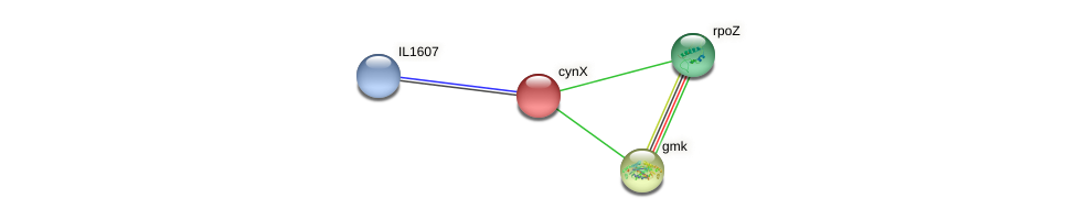 cynX protein (Idiomarina loihiensis) - STRING interaction network