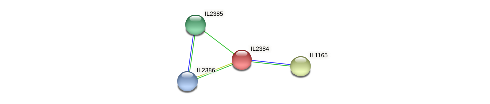 IL2384 protein (Idiomarina loihiensis) - STRING interaction network
