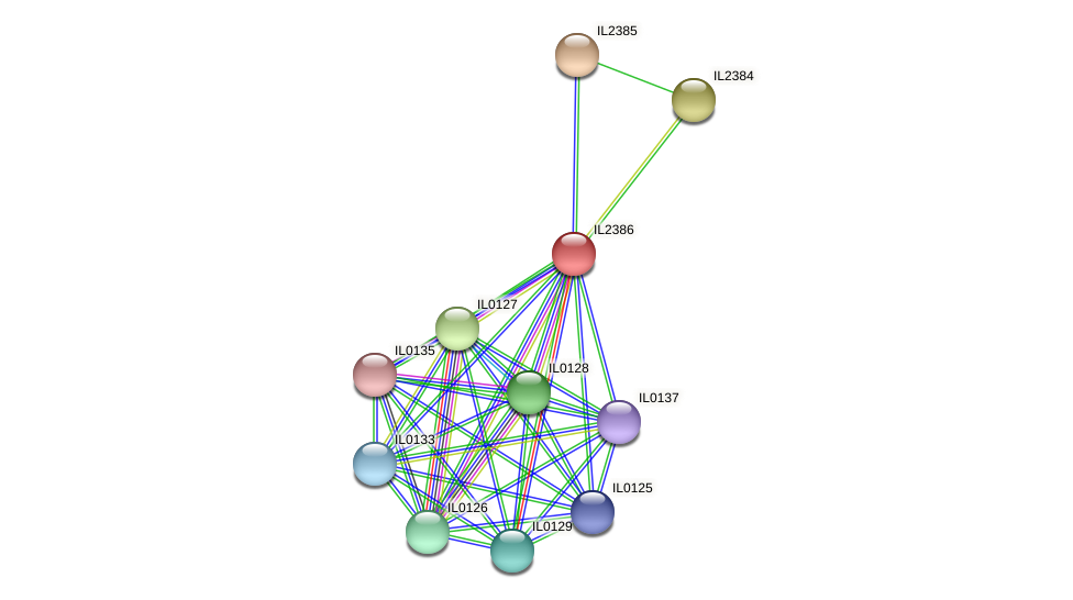 IL2386 protein (Idiomarina loihiensis) - STRING interaction network