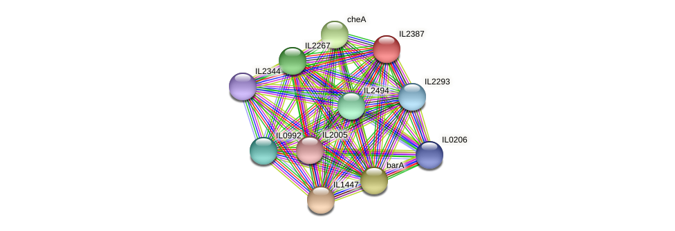 IL2387 protein (Idiomarina loihiensis) - STRING interaction network