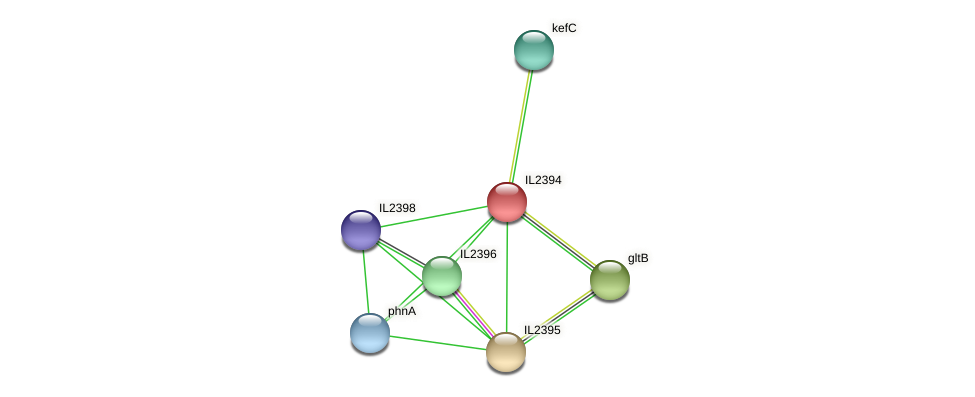 IL2394 protein (Idiomarina loihiensis) - STRING interaction network