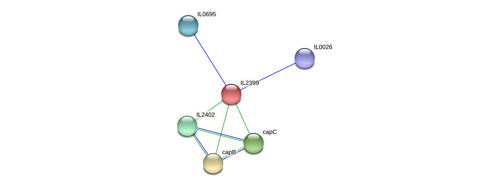 IL2399 protein (Idiomarina loihiensis) - STRING interaction network