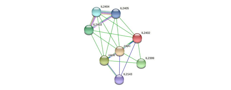 IL2402 protein (Idiomarina loihiensis) - STRING interaction network