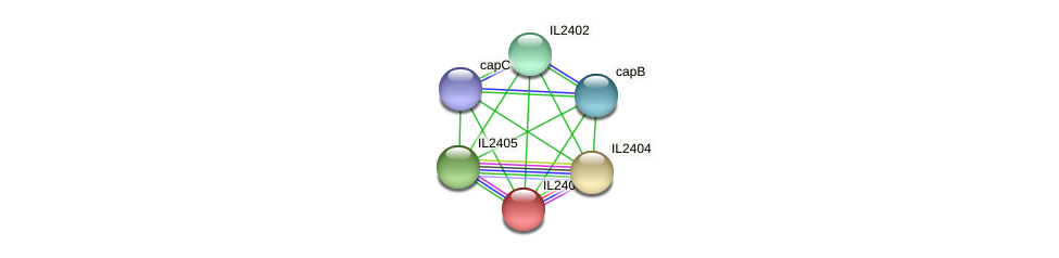 IL2403 protein (Idiomarina loihiensis) - STRING interaction network