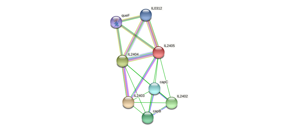 IL2405 protein (Idiomarina loihiensis) - STRING interaction network