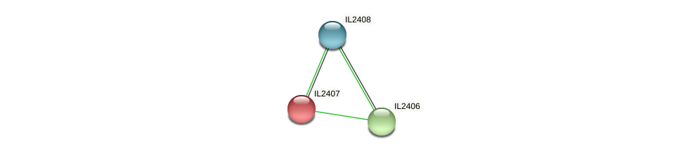 IL2407 protein (Idiomarina loihiensis) - STRING interaction network