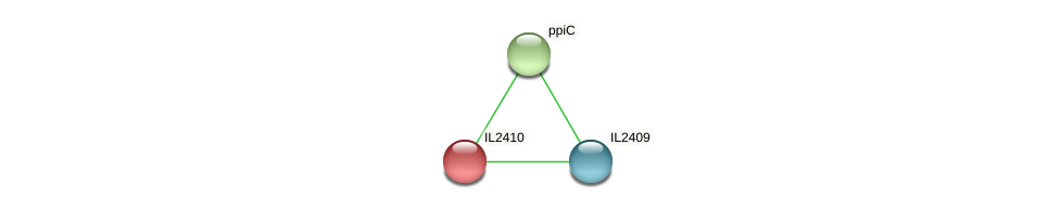 IL2410 protein (Idiomarina loihiensis) - STRING interaction network
