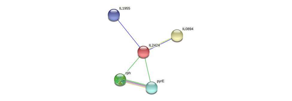 IL2424 protein (Idiomarina loihiensis) - STRING interaction network