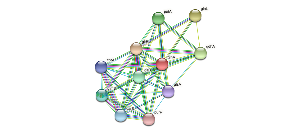 glnA protein (Idiomarina loihiensis) - STRING interaction network