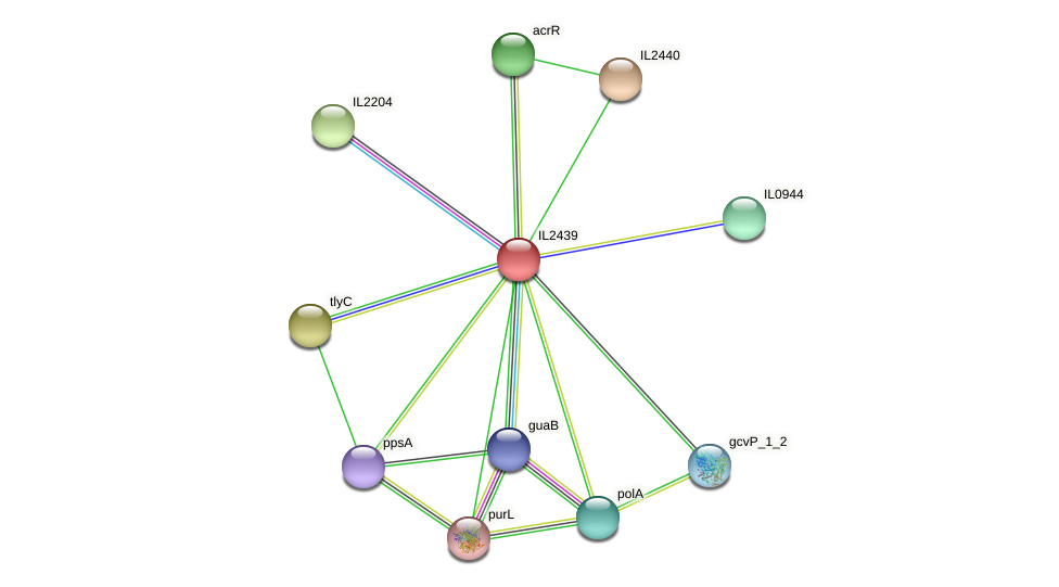 IL2439 protein (Idiomarina loihiensis) - STRING interaction network