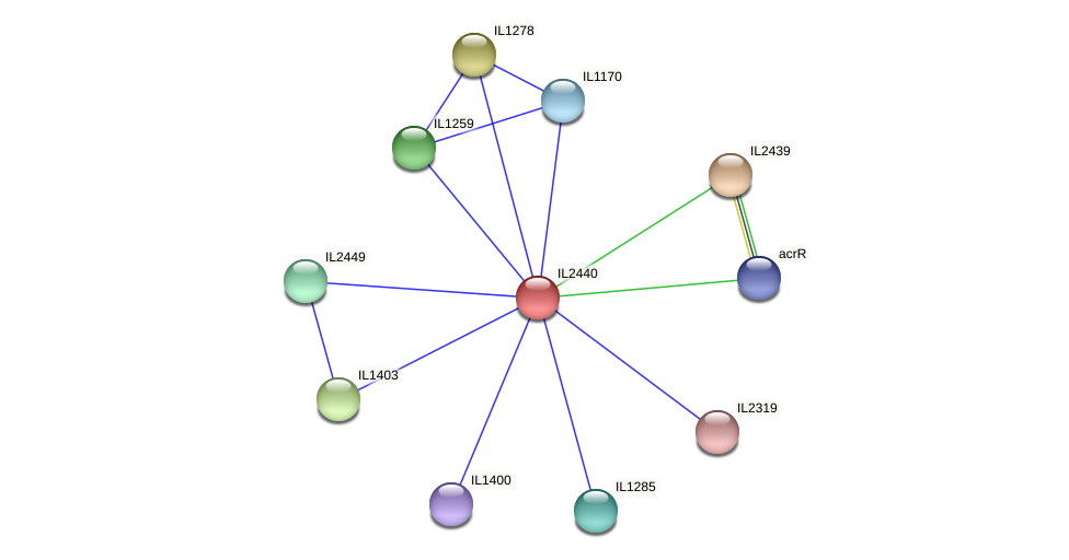 IL2440 protein (Idiomarina loihiensis) - STRING interaction network